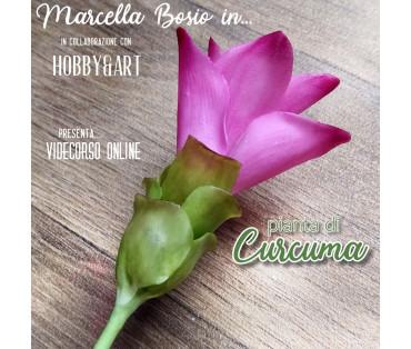 CURCUMA pianta - Videocorso online con Marcella Bosio