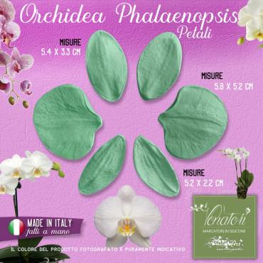 Venatore in silicone Orchidea Phalaenopsis Set 3 coppie - ITA