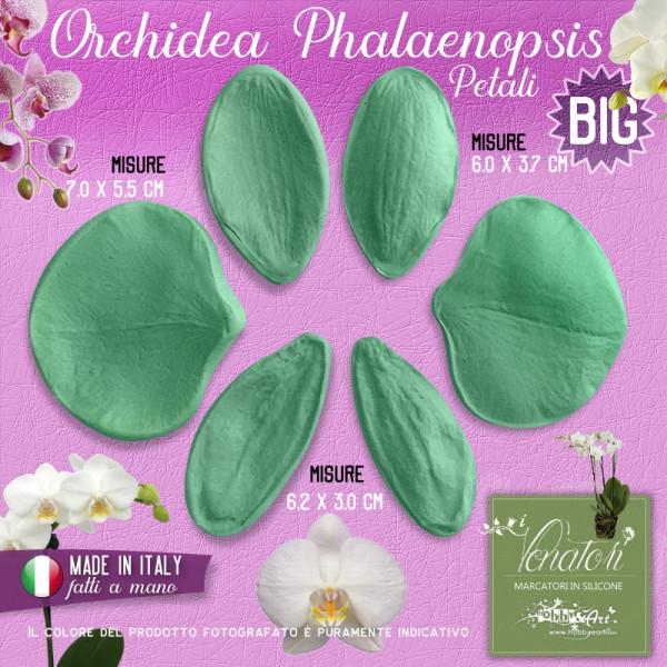 Venatore in silicone Orchidea Phalaenopsis Grande Set 3 coppie - ITA