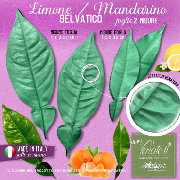 Venatore in silicone foglia di Limone o Mandarino selvatico, 2 coppie, 2 misure - ITA