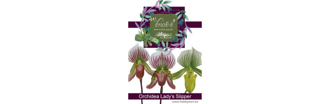 Orchidea Lady's Slipper