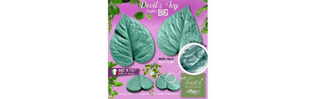 Pothos - Devil's Ivy