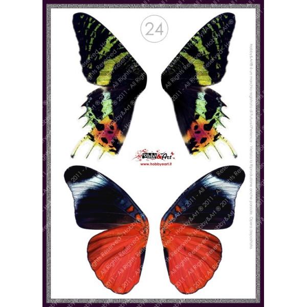 Ali stampate su lucido - COPPIA 24