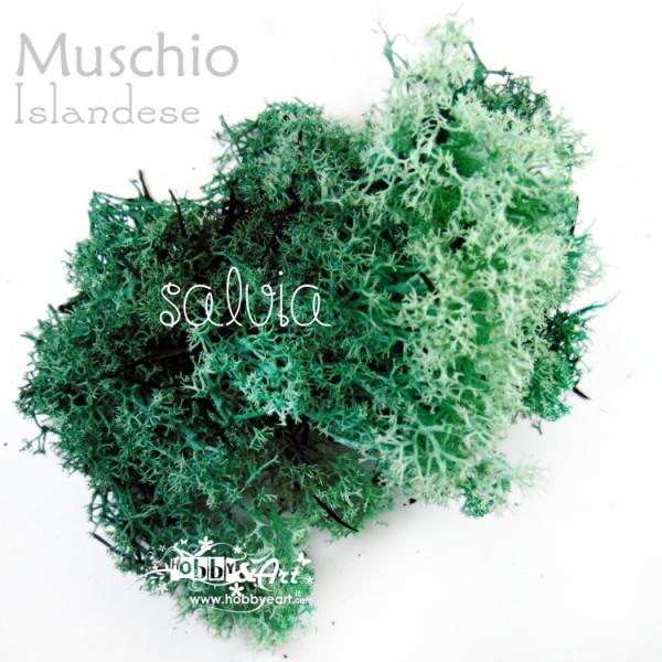 Muschio Islandese Verde Salvia - 22g