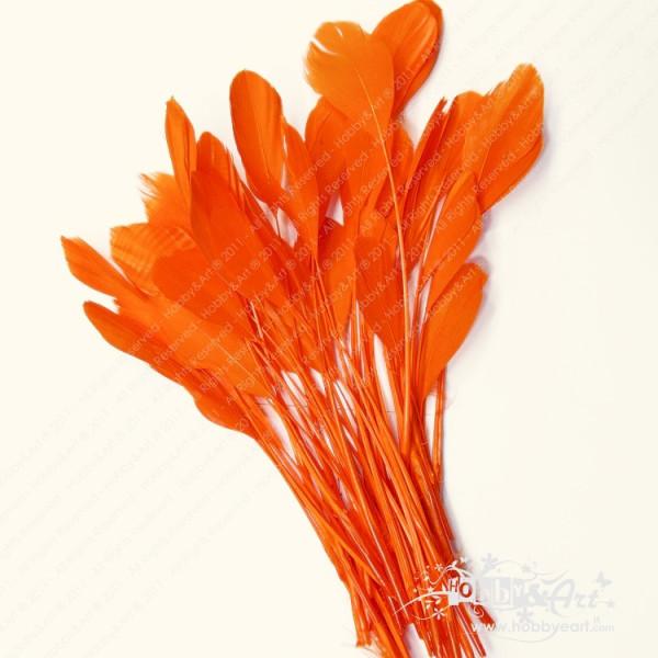 Piume lunghe Arancio